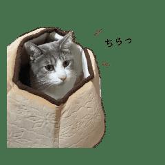 かわいい猫ちゃんのスタンプ!