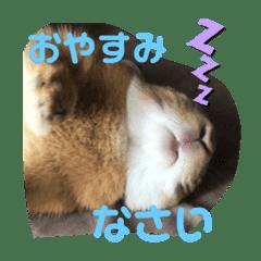 うさぎのモカちゃんスタンプpart7