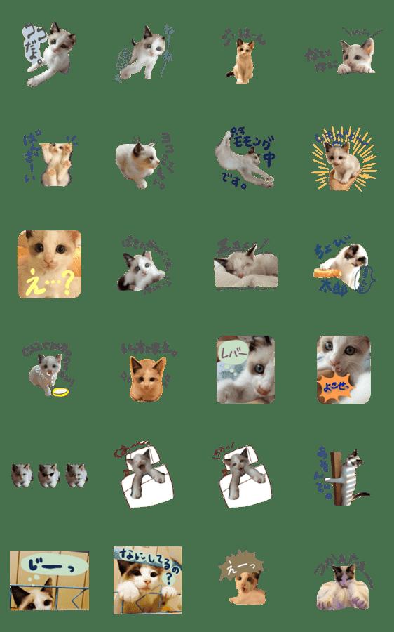 「こちまる〜子猫〜」のLINEスタンプ一覧