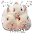Bunny photo sticker 5