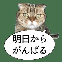 猫野家すたんぷ【言い訳編】