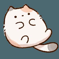 Plump calico cat(thai)