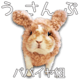 Bunny photo sticker 6
