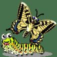 旧世界のアゲハチョウ
