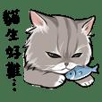 Dudu life - Cats are so hard