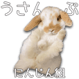 Bunny photo sticker 7
