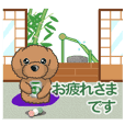 TOY POODLE TOY POODLE V9(Animation4R)