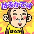お猿の『はるか』2