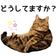 Torajiro's sticker 4