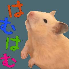 It is a cute hamster