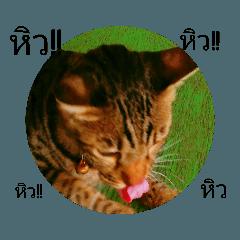 ไอเทมทาสแมว