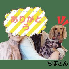 Chipo-san sute message  Sticker