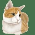 猫のメッセージ(茶トラ白)