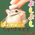 シマリス♡ビビSP