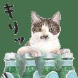 Cats on stuff
