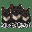 Black Blank Cat