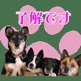 長崎ライブオブアニマル