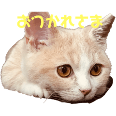 yumi_20200706162213