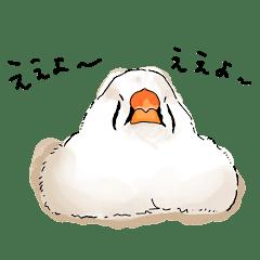 Zebrafinch finn&jake