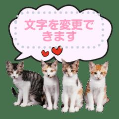 tyatya ichigo kotarou Momo