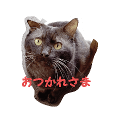 KOHADA_20200706215954