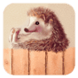 BOCKLE  -The hedgehog-