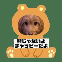 MATSURA SHORI_20200706180827
