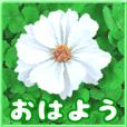 大人やさしい大きな花のスタンプ