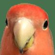 love bird BIG Sticker