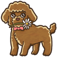I Love Toy Poodle so much!