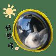 大頭の兔生活