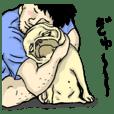 co-chan pug 2