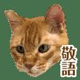 おっぽ@保護猫 4