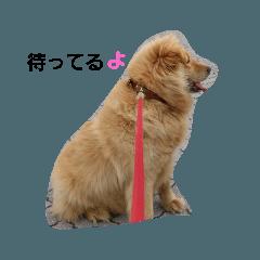 makoto_20200711082720