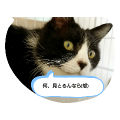 makoto_20200711134508