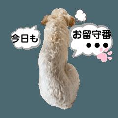 yuzu_20200711225754