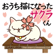 Sakura becoming a house cat.