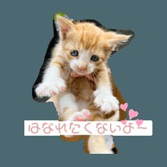 Hinata_20200713232746