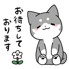 Polite Kuroshiba