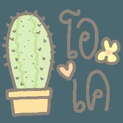 Cactus Lovers (Plant)