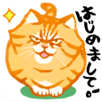 Zunzun CHATORA (Orange Tabby Cat)