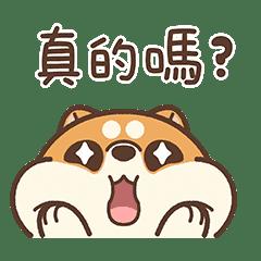 米犬日常 - 呆萌生活篇