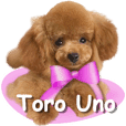 Toro, The Uno Family's toy poodle