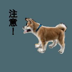 麻糬日常生活No.2