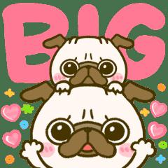 BIG♡パグちゃん