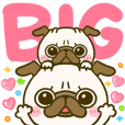 pug chan kawaii BIG