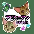 CAT-Abyssinian2