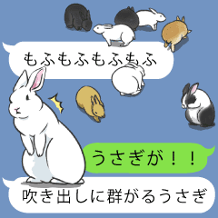 The group of the rabbit came