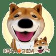 Kenta Shiba