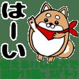 Marumaru-shibainu!